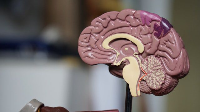 3 Common Signs Of Alzheimer's Disease